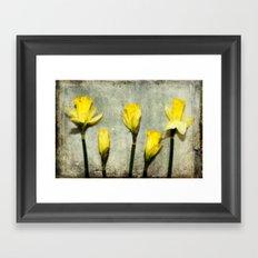 Daffodil's Framed Art Print