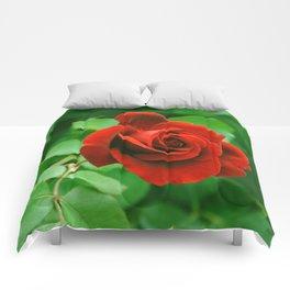 My Crazy Rosebush Comforters