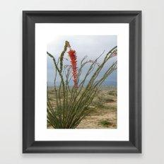 Ocotillo cactus Framed Art Print