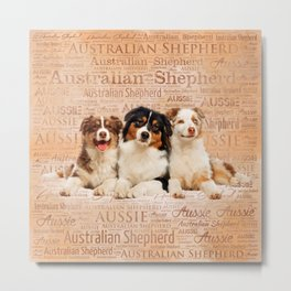 Australian Shepherd dogs  on Word Cloud 1 Metal Print