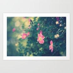 Central Park Roses Art Print