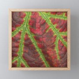 Vine leaf details Framed Mini Art Print