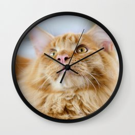 Maine Coon cat Wall Clock