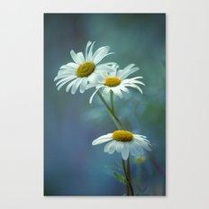Daisy Blues Canvas Print