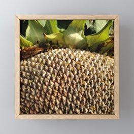 Sunflower Seeds Framed Mini Art Print