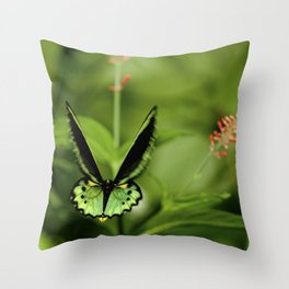 Birdwing Butterfly Throw Pillow
