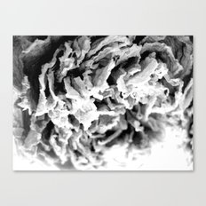 Black and White Dried Peony Canvas Print