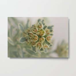 Small | Soothing Metal Print
