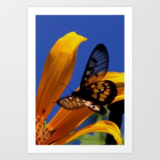Transparent Butterfly Art Print