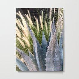 First Light on Cactus Garden  Metal Print
