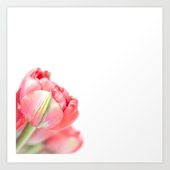 Peony Tulip... (2) Art Print