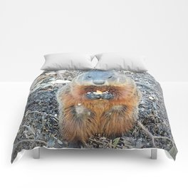 Ground Hog Comforters
