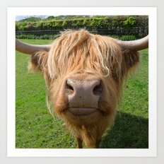 Highland cow nose Art Print