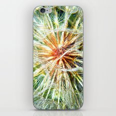 Up Close and Personal Dandelion iPhone & iPod Skin