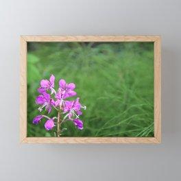 Fireweed Wildflower Framed Mini Art Print