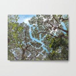 Treeline Monteverde, Costa Rica Metal Print