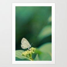 Holly Blue Art Print