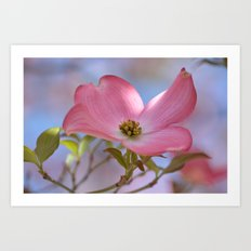 Beautiful Pink Dogwood Flower  Art Print