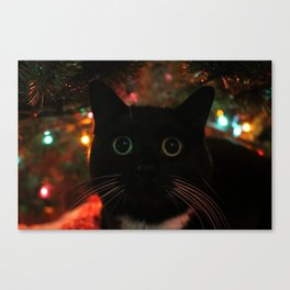 Bokeh Kitty Photo Canvas Print