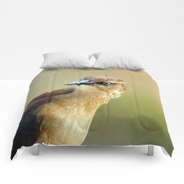 Female Great-tailed Grackle Comforters