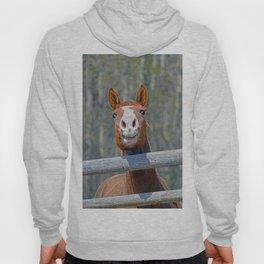 Horse Humour Hoody