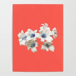 Blue Heart Lilies on Living Coral Poster