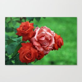 Branch of Red Roses Canvas Print