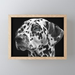 Dalmatian with One Blue Eye Portrait Photograph Framed Mini Art Print