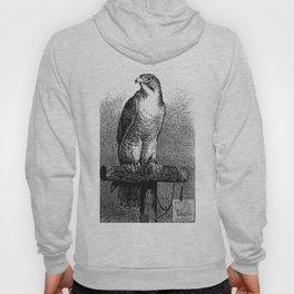 Peregrine Falcon Hoody