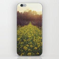 Vineyard Sunset iPhone & iPod Skin