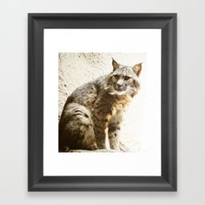 Bobcat Sitting Framed Art Print