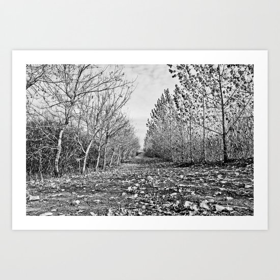 Pathway through the trees Art Print