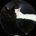 catsuper in black and white