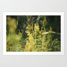 Mountain Meadows 03 Art Print