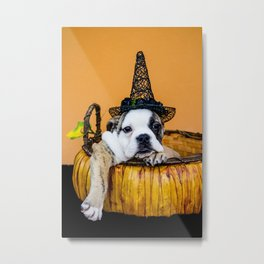Bulldog Makes Funny Pose in a Pumpkin Basket while Wearing a Witch Hat for Halloween Metal Print