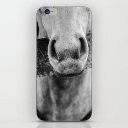 Grey Muzzle iPhone Skin