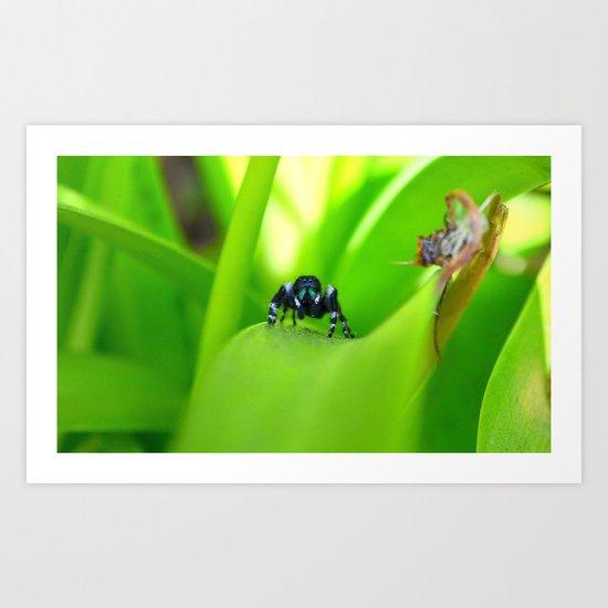 Spider Stare Art Print