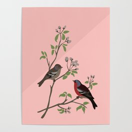 Peaceful harmony in the cherry tree - Illustration Poster