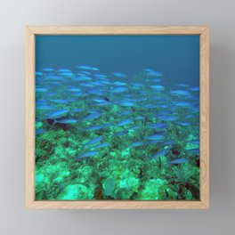 Blue Fish Exodus Framed Mini Art Print