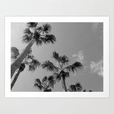 Palm Tress, Fuerteventura. Art Print