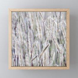 Silver hair grass Framed Mini Art Print
