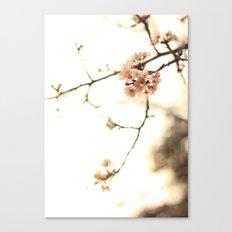 pinky petals  Canvas Print