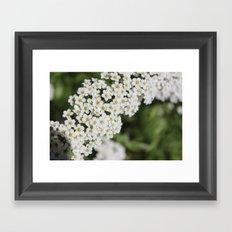 Lil flower buds Framed Art Print