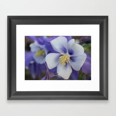 Purple Stars Framed Art Print