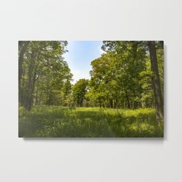 USA Cranberry Slough Nature Preserve Summer forest Grass Forests Metal Print