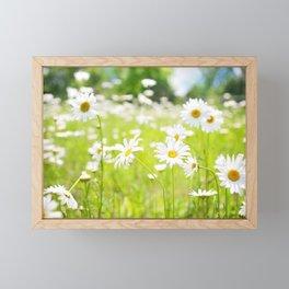 Daisy Meadow Framed Mini Art Print
