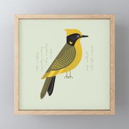 Helmeted Honeyeater, Bird of Australia Framed Mini Art Print