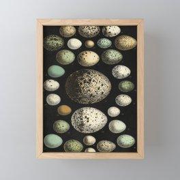 Naturalist Eggs Framed Mini Art Print