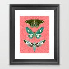Lepidoptery No. 5 by Andrea Lauren  Framed Art Print