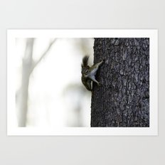 Baby Red Squirrel Art Print